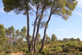 PR 177.2 – El Negrete